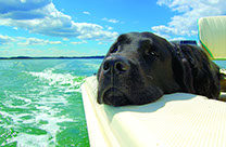 dog_boatus_photo